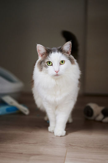Portrait of cat standing on floor at home
