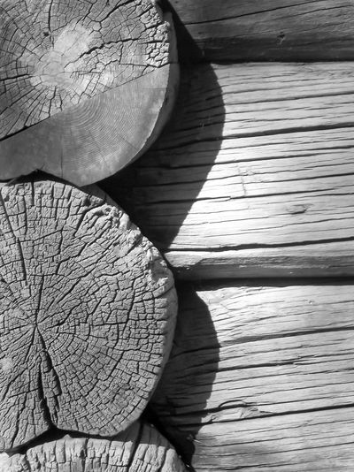 Close-up of wooden log in forest