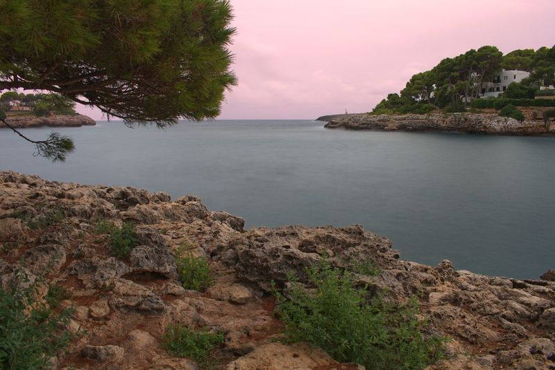 Long Exposure Cala D'or Pink Sky Vacations Mallorca Water Sky Tranquility Beauty In Nature Tree Tranquil Scene Sea Plant Scenics - Nature Nature No People Land Beach Rock Idyllic Day Solid Outdoors Non-urban Scene