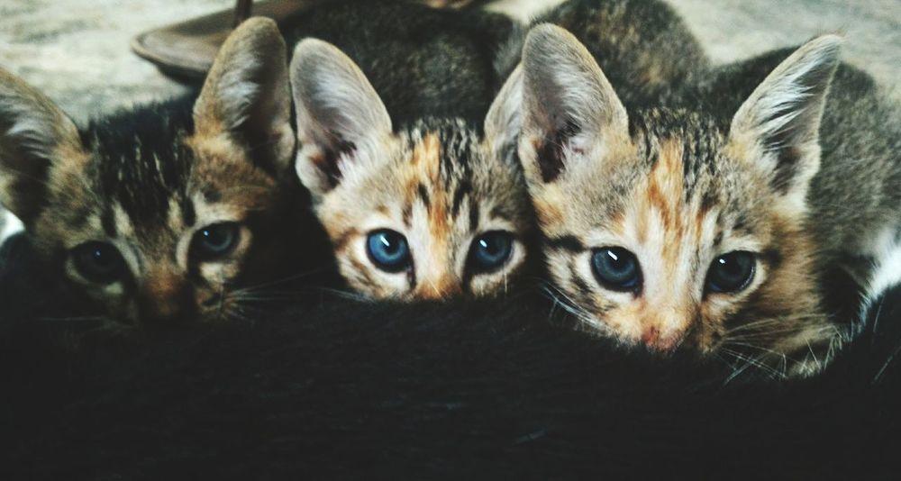 Animal Themes Pets Domestic Animals Zoology Cat Portrait Close-up Nature Wonderful Indonesia Obelixphotohraphy