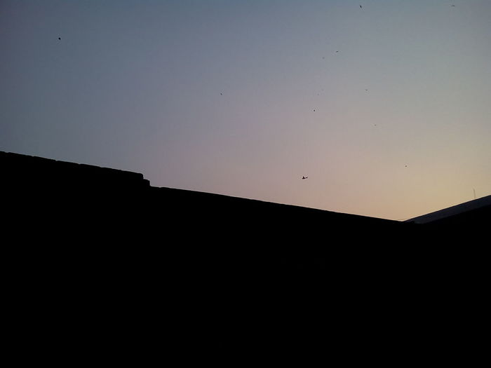 Dusk Sky Aeroplane No People Kites birds