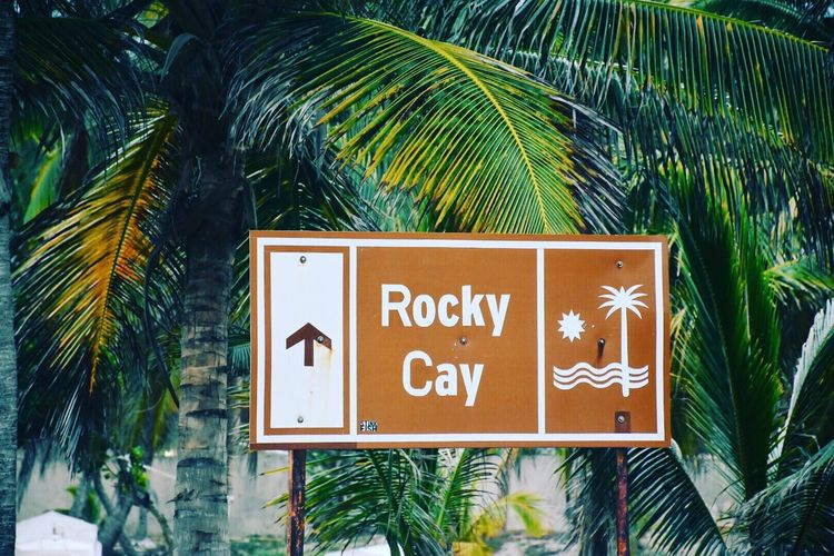Close-Up Of Information Sign By Palm Trees