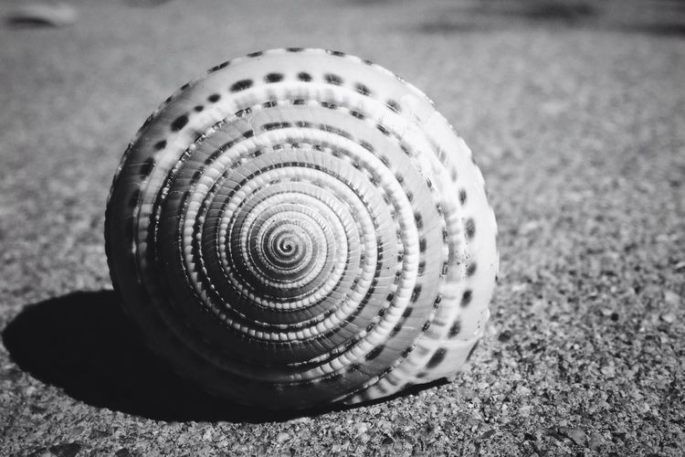 Fibonacci Spiral Nature Nature Collection Blackandwhite