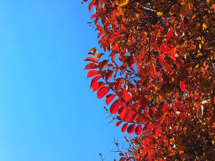 Fall Leaves and