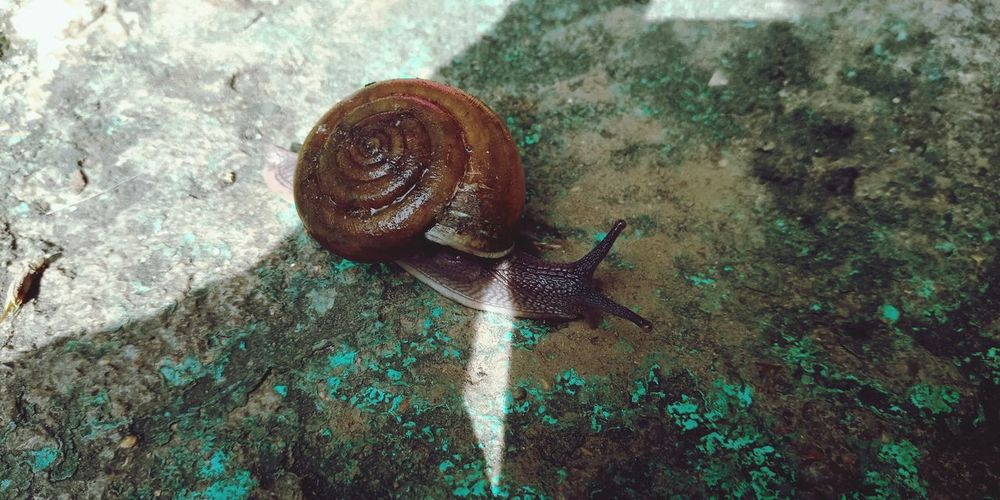 Slug Insect