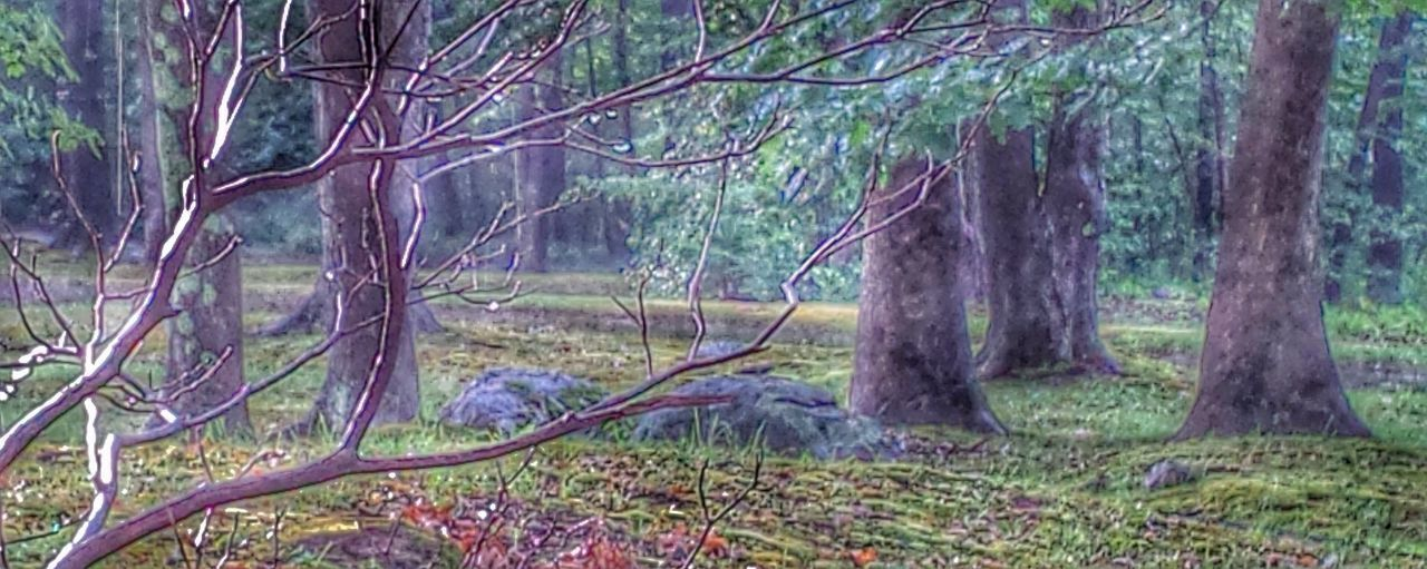After The Rain New England Woods Mossy Woods Moss Tranquility Fine Art Photography Showcase July