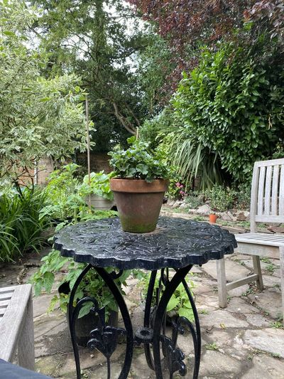 Potted plants on table in garden