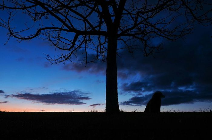 Sillouette Learn & Shoot: After Dark Long Exposure Showcase March My Dog Is Cooler Than Your Kid.