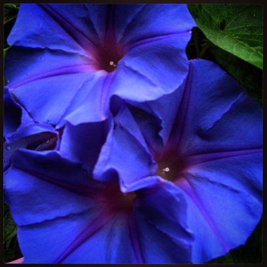 Estaes_flores Flowers Flores Loves_flowers_ Collection_flowers Color Loves_details цветы цвет Детали