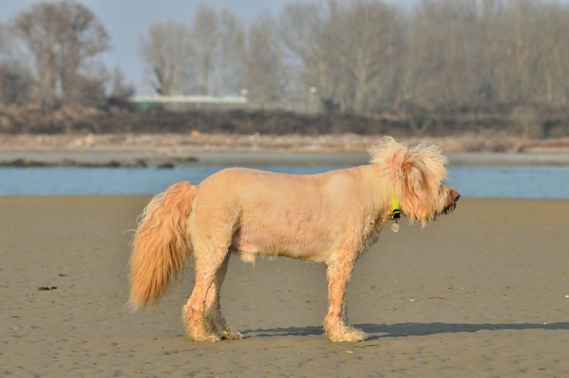 Side view of a dog on beach