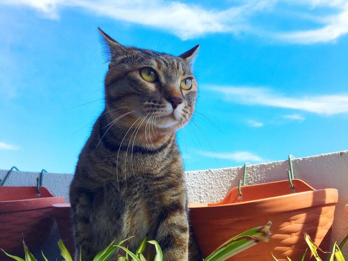 Relaxing Enjoying Life Hello World EyeEm Best Shots First Eyeem Photo Taking Photos Pet Photography  Mycat♥ Playing With The Animals Cute Pets 猫 I Love Cats Sky_collection Cat Color Portrait Cat Lovers Sky And Clouds Today's Hot Look