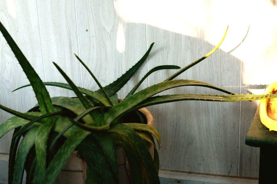 Grow Plants 50mm Canon Photography Light Home