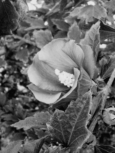 Black & White Up Close Flower Found On Roll