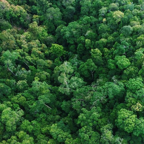 Aerial view of rainforest
