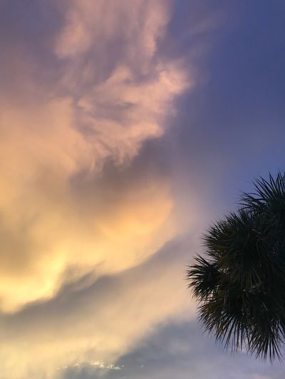Florida Palm Tree Silhouette Sunset Colors Illuminated Clouds Sunset Clouds Sunset Clouds And Sky The Week On EyeEm