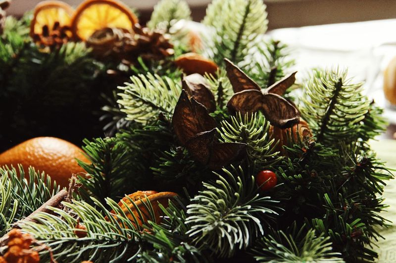 Christmas tree Plant Tree Christmas christmas tree Growth Close-up Nature Coniferous Tree Christmas Decoration Green Color Holiday Decoration No People Celebration Pine Tree Pine Cone Day Beauty In Nature Leaf Pinaceae