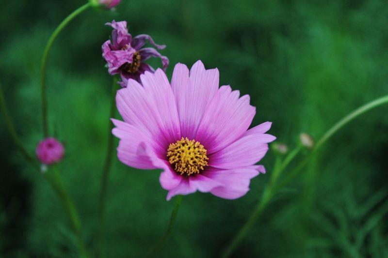 -Bloom-