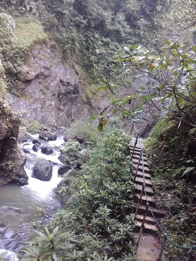 Walk to waterfalls Architecture Beauty In Nature Bridge - Man Made Structure Day Daytripping Forest Growth Mountain Nature Navua Waterf No People Outdoors Scenics Tranquil Scene Tranquility Tree Walk To The Waterfall Water Waterfalls And Calming Views