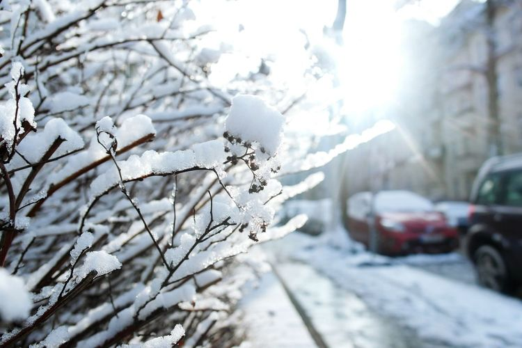 Winter Wonderland Snow ❄ Nature_collection Open Edit How's The Weather Today? Exploring Nature Macro_collection