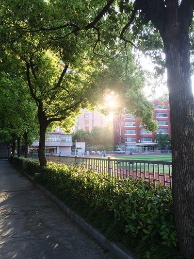 Sunshine Enjoying Life 43 Golden Moments