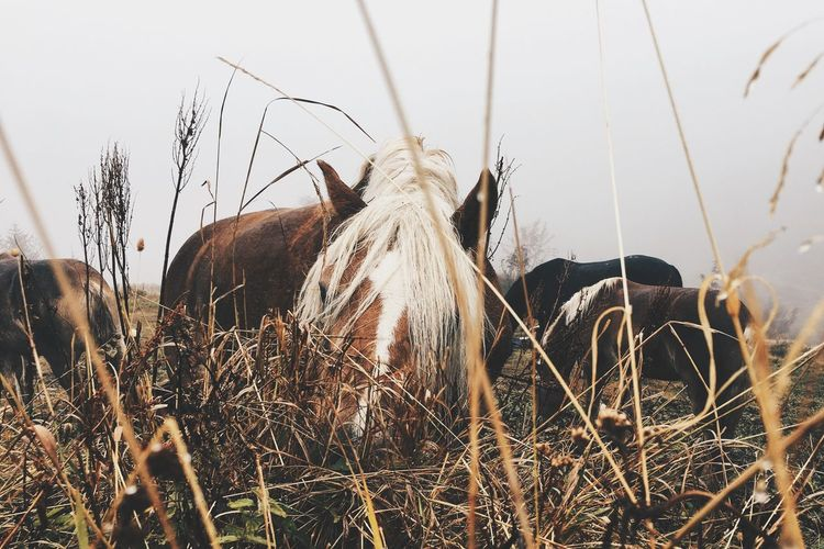Haflinger at their favorite activity Horse Haflinger Southtyrol  Alps Vscocam VSCO Wanderlust WeLoveNature  Mointains Mountainlove Pictureoftheday Foggy Day Rainy Day