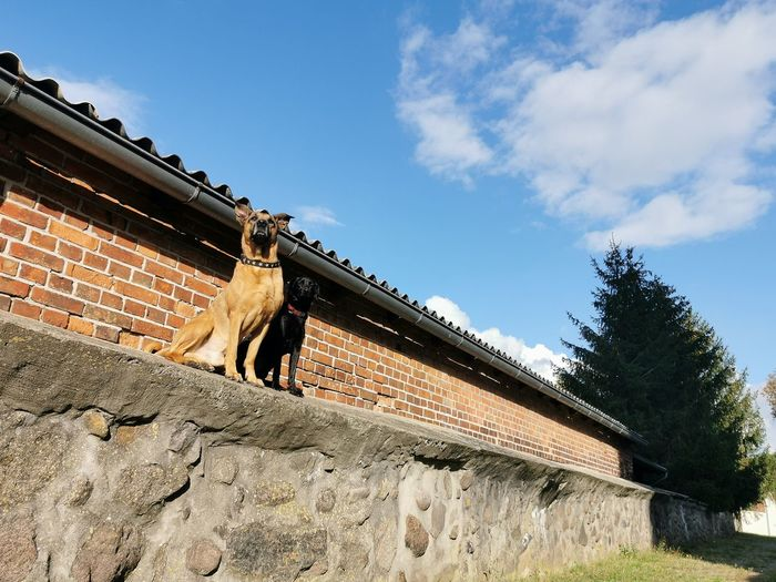Low angle view of horse by wall against sky