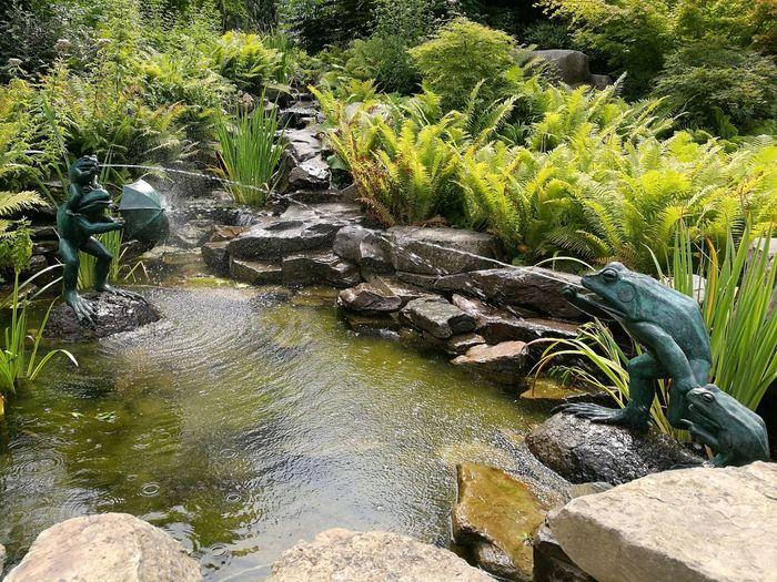 Frogs. Nature Water Frog Statue Zoo Antwerpen