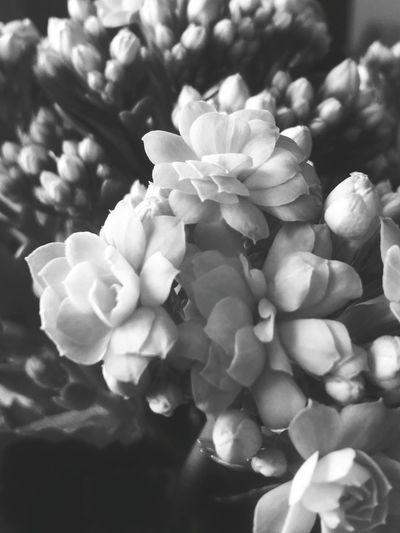 Flowers Flower Love Gift Grendma Birthday 85 Hi! Love ♥ Photography