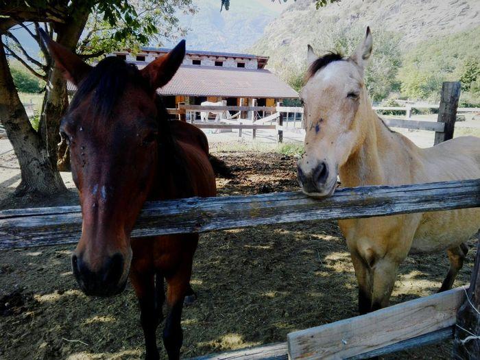 Togetherness Paddock Standing Horse Livestock Sky Pony