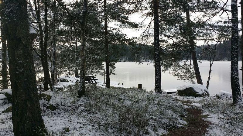 Snart kan man gå stigen ner och sätta sig på bänken och njuta av de meditiva omgivningarna Relaxing Walking The Dog Snow ❄