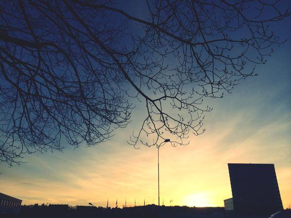 Sunset Silhouettes Sun Evening Sky