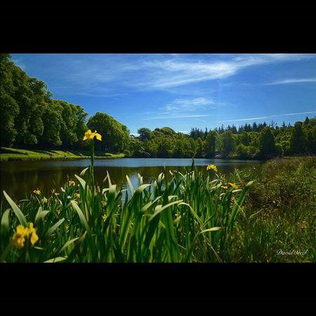 Callendar Park, ISO 100, f3.5, 1/800th CPL. Princely_shotz Ig_shutterbugs Nature_sultans Loves_Scotland BonnieScotland Igbest_shotz Naturelover_gr Ig_landscapes Bnwscotland Insta_Scotland Loves_Scotland Master_shots Nature_wizards Loves_nature Landscape_captures Ig_scot Ic_water Ig_bliss Icu_britain Britains_talent Jaw_dropping_shots Nature_best_shots Global_hotshotz Callendarpark Nikonphoto nikond7000