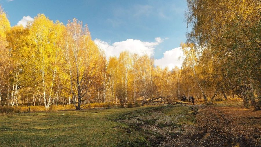 Tree Nature Beauty In Nature Tranquility Outdoors Autumn Yellow Leaves Scenics Landscape