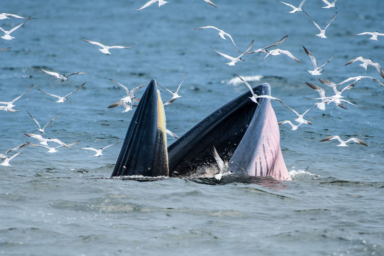 Birds swimming amidst whale swimming in sea