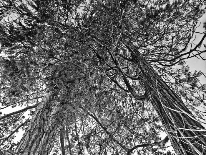 Bare Tree Black & White Blackandwhite Branch Danger Dry Growth HDR Hdr_Collection Monochrome Mystic Nature Plants Season  Tree Trees Twig Winter The Great Outdoors With Adobe