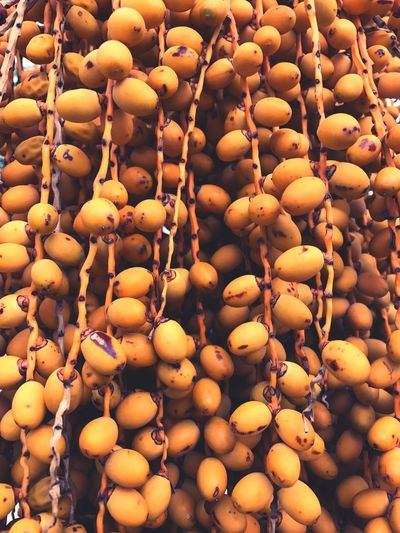 Full Frame Shot Of Dates Growing On Palm Tree
