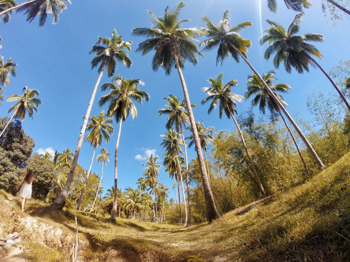 Beauty In Nature Blue Clear Sky Day Growth Landscape Low Angle View Nature No People Outdoors Palawan Palm Tree Scenics Sky Tranquil Scene Tranquility Tree Tree Trunk