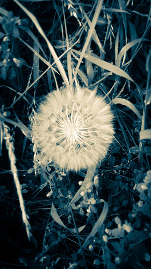 Check This Out Photography Taking Photos Nature Flowers Montana Kalispell Montana