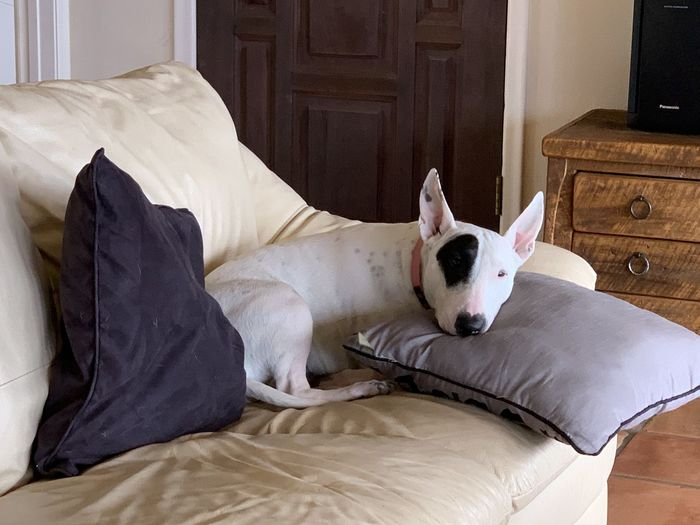 View of dog resting on bed