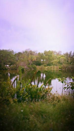 Pond Green