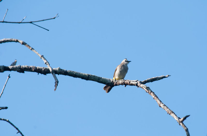Low angle view of bird perched on branch