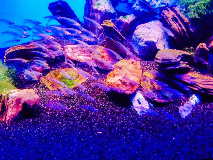 Multi Colored Close-up Nature Beauty In Nature Vibrant Color No People Sea Geology Tranquility Reef Eroded Abundance Water Outdoors Full Frame Scenics Life Under Water Undersea Life Animal Pink Color рыбки Sea Life Zoology Animal Themes Animals In The Wild