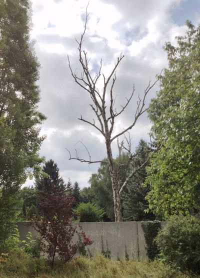 Abandoned Tree Soistberlin  EyeEm Nature Lover