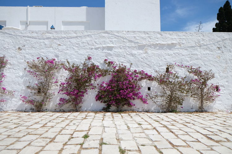 Tunisia Travel Traveling Walking Around Streetphotography Wall Scenery Flowers Flower Sidi Bou Said The Essence Of Summer