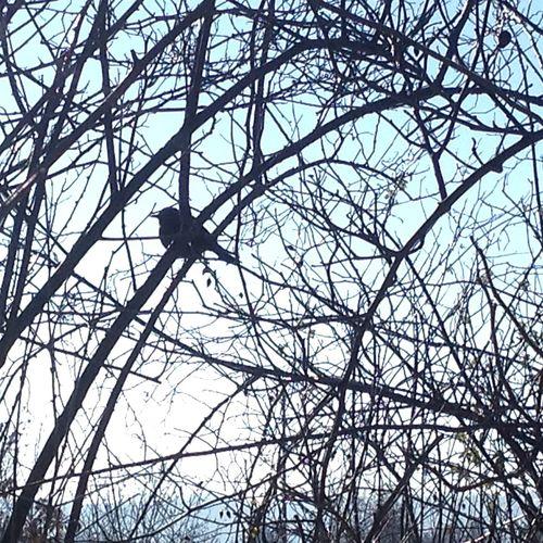 Little Bird Hide And Seek Sunshine ☀ Winter Wonderland Nature EyeEm Nature Lover Light And Shadow