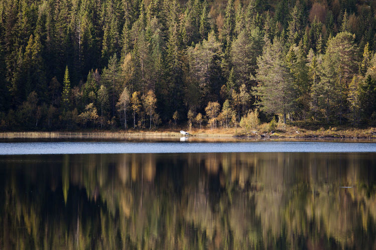 Panoramic view of pine trees reflected on lake in forest against sky