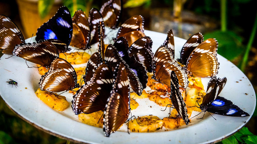 Close-up of butterflies