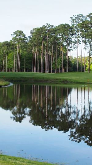 pine tree reflections in pond water Bradleywarren Photography Bradley Olson Room For Text Room For Copy Copy Space Copyspace Backgrounds Background Reflections In The Water Pond Reflections Water Reflections Reflecting Pool Mirror Reflection Pine Woodland Pine Tree Pine Trees Pinetrees South Carolina Natural Beauty Geometry Pattern Tree Water Lake Reflection Tropical Climate Sky Lush - Description Lush Foliage Woods Greenery Tree Canopy