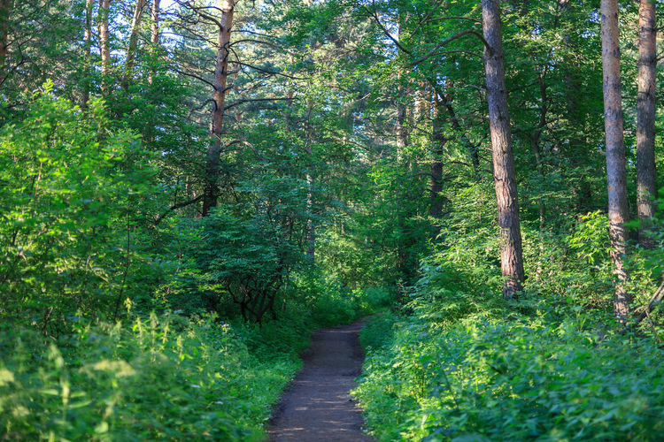 Beauty In Nature Day Direction Foliage Footpath Forest Green Color Growth Land Lush Foliage Nature No People Outdoors Plant Siberia Summer The Way Forward Trail Tranquil Scene Tranquility Tree Tree Trunk Trunk WoodLand