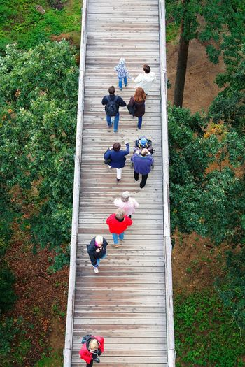 High Angle View Steps Person Plant Park - Man Made Space Blue Day Growth Summer Stairway Boardwalk Treetopwalk